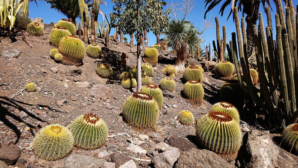 Cactualdea - Photo from the largest Cactus Park in Europe